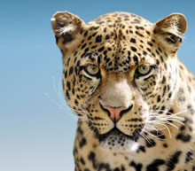 Safari charter flights