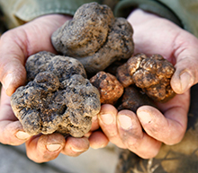 Luxury Truffle hunting escape by private jet
